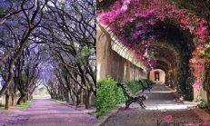 Dünya'nın En Romantik Sokakları